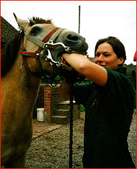 Equine Dental Technician